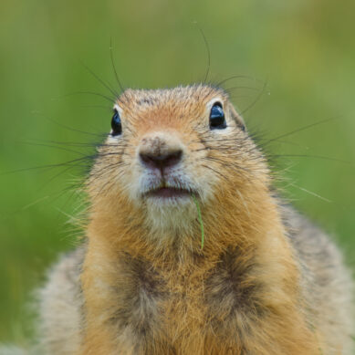 Your Credit Union Needs a Data Analyst, Not a Data Gopher